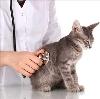 Ветеринарные клиники в Вознесенье